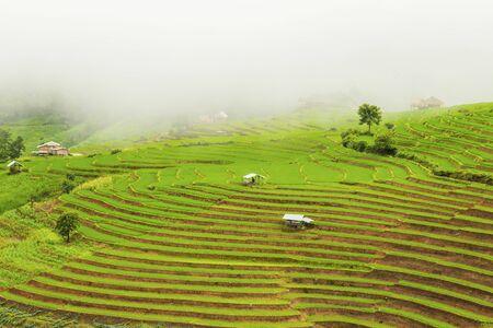 Rice terrace at Pa-pong-peang , Mae Chaem, Chaing Mai ,North Thailand.. Imagens