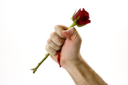 flower thorns: Holding red rose  Stock Photo