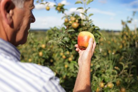 Farmer holding a red apple Stock Photo