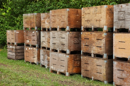 Stacked apple crates in an orchard Stock Photo
