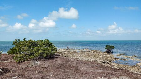 Sea bird habitat on the Florida Keys
