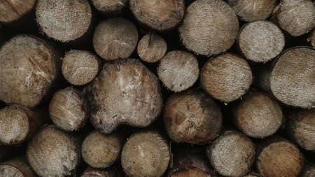 Woodstack dark moody structured natural forest background
