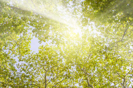 Warm rays of sunlight breaking through tree crowns in spring Stock Photo