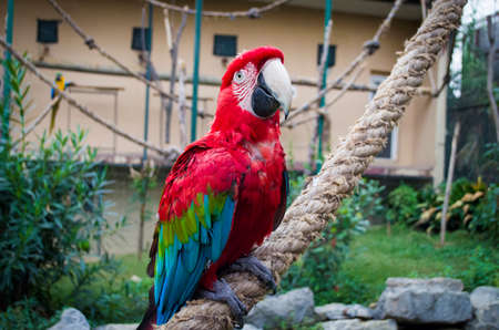 colorful portrait of amazon red macaw parrot against jungle side view of wild ara parrot head in cage