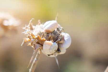 Snail crawling on the stem of a plant. Nature and fauna of the coasts in the Mediterranean. Selective focus on a plant with a dried snail shell. Imagens