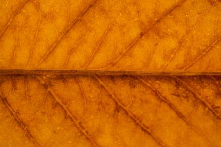 Macro on Autumn Foliage. Close up