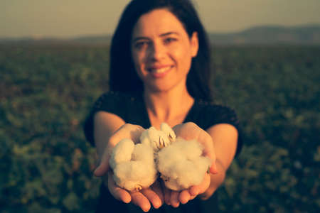 natural product, raw cotton flowers on womans hands on green yard outdoor background