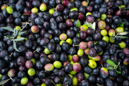 Background of olives close up Reklamní fotografie