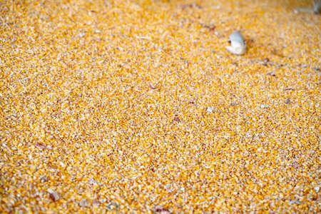 dried corn for background uses Reklamní fotografie