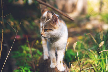 Fluffy ginger tabby cat walking on old wooden log Reklamní fotografie