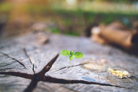 fresh green young plant of new seed born and grow up on a dark brown dead log tree in jungle showing contrast of colors lighting meaning and feeling of life