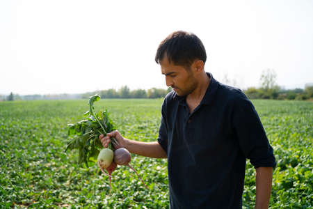 Farmer holding harvested radish, close up of hand with root vegetable