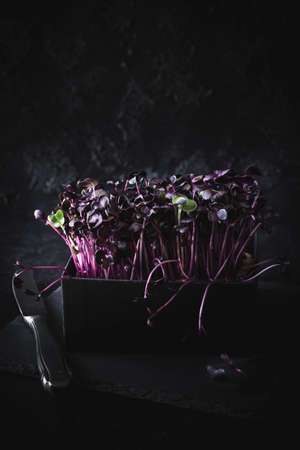Puple peppercress in a black box, on slate platter and dark background, with two single green leaves. Closeup