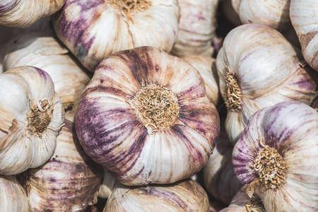 Closeup of ripe garlic