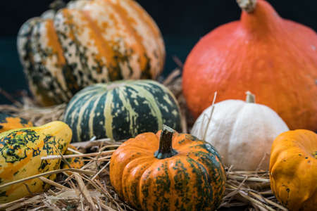 Variety of eatible and non-eatible pumpkins on straw and wood. Autumn decoration concept.