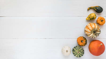 Colorful little pumpkins on a white wood with copy space. Banner for own text. Halloween, autumn, thanksgiving concept. 免版税图像