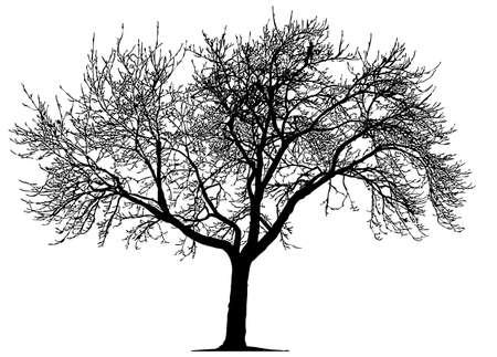 arbre mort: Dead Tree