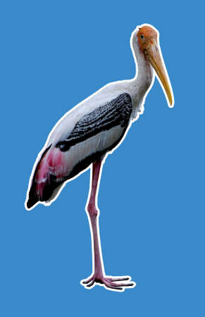 harbinger: The storks folkloric role as a bringer of babies and harbinger of luck and prosperity, where it is common in childrens nursery stories.