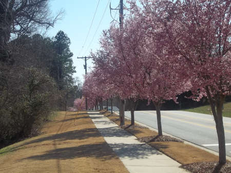 Beautiful trees with pink flowers