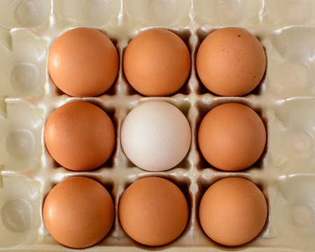 lonliness: A single white egg surrounded by number of brown eggs. Concept can demonstrate either of diversity, lonliness, leadership or teamwork Stock Photo