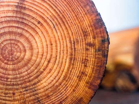 木製の背景には、素敵な古い松の枝をカット 写真素材