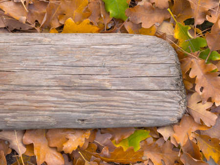 wood craft: Autumn foliage and the old Board background Stock Photo
