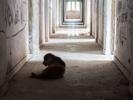 Eenzame verdwaalde hond in een verlaten gebouw Stockfoto