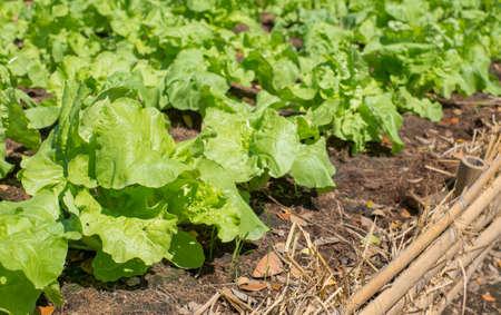 and plot: plot vegetable Stock Photo