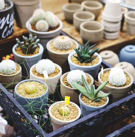 types of cactus: many cactus on pot for nature garden fair