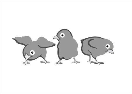 triplets: 3 chicks Illustration