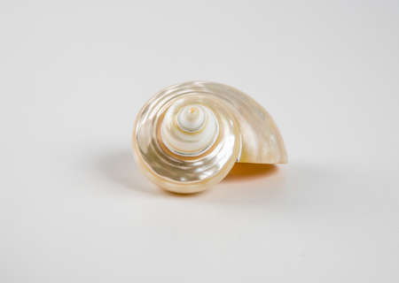 Beautiful sea shell on a white background.