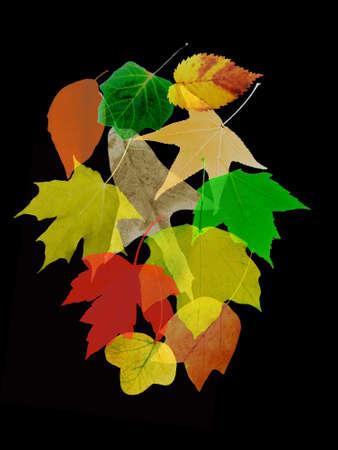 Semitransparent colorful leaves on black background.