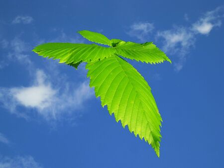 Green leaf flying on blue sky background Stock Photo