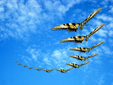 Conwoy of butterflies on blue sky background. Stock Photo