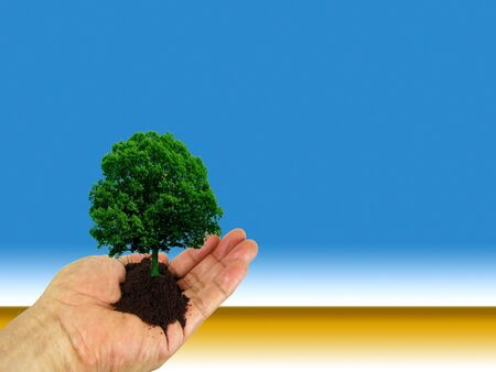 Tree on a hand in front of a desertic background. Stock Photo
