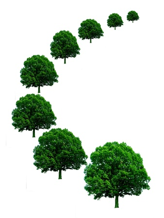 Green trees in perspective on white background