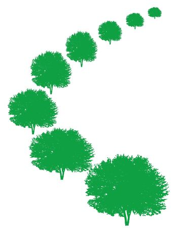 Silhouettes of green trees in perspective on white background