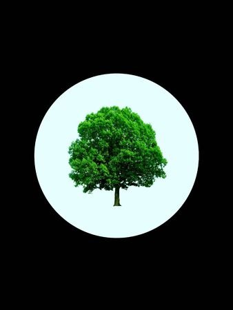 Green tree inside of a white circle on black background, in a way of logo