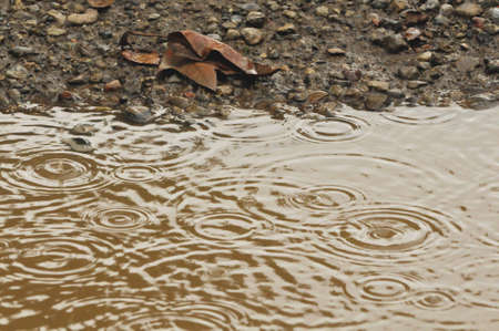 soil pollution: raindrops in mud puddle with dead leaf  Stock Photo