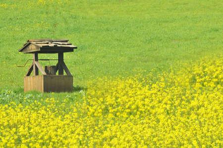 wishing well in field of flowers photo