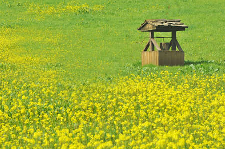 wishing well in field of yellow mustard flowers-right photo