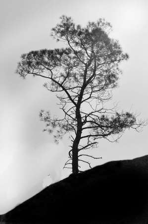 rooted: single tree on hillside