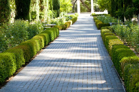 hedges: brick walkway through garden
