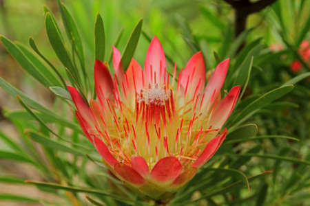South Africa, National flower garden, Cape Town, South Africa