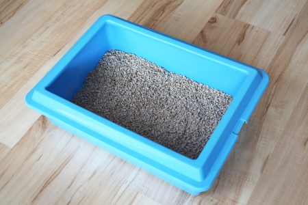 Blue cat litter box photo