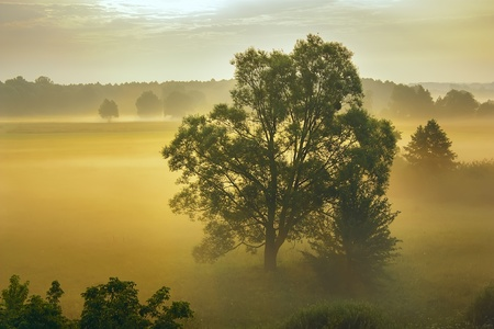 Fog and trees in the morning sun rays. photo