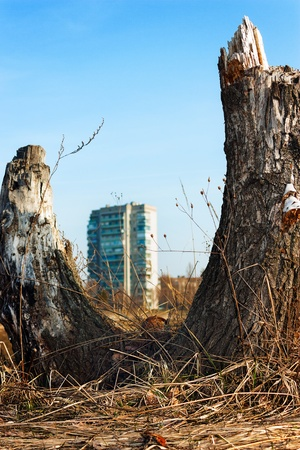 Theme of environment, and plant something! It's felled tree in the background of a multistory building - a symbol of environmental protection. photo