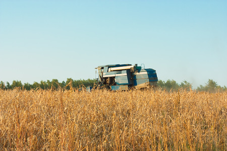 harvests: Agricultural industry.This combine harvests soybeans, autumn evening.