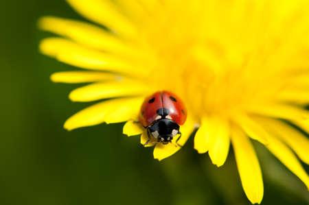 ladybug Banque d'images