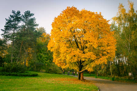 fall landscape: some autumn leaves on  the trees